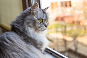 visite-a-domicile-chats
